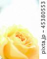 花 薔薇 植物の写真 45380553