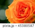 バラ 45380587