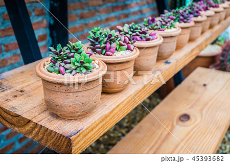 Row of small tree in beautiful pot decorate 45393682