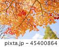 紅葉 エゾオオモミジ 楓の写真 45400864