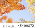 紅葉 エゾオオモミジ 楓の写真 45400872