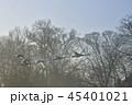 白鳥 コハクチョウ 鳥の写真 45401021