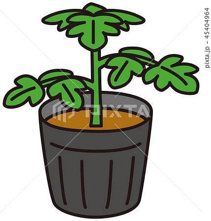 野菜の苗 45404964