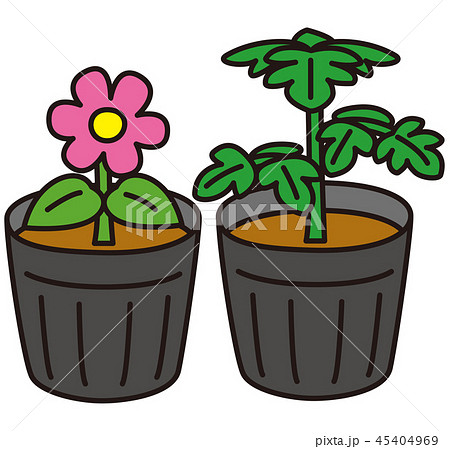 野菜と花の苗 45404969