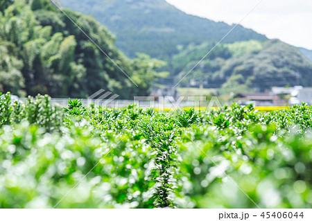 農業 45406044