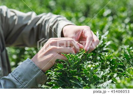 農業 男性 45406053