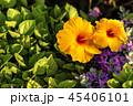 お花 フラワー 咲く花の写真 45406101