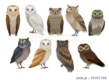 Flat vector set of different species of owls. Wild forest birds. Flying creatures. Elements for 45407798