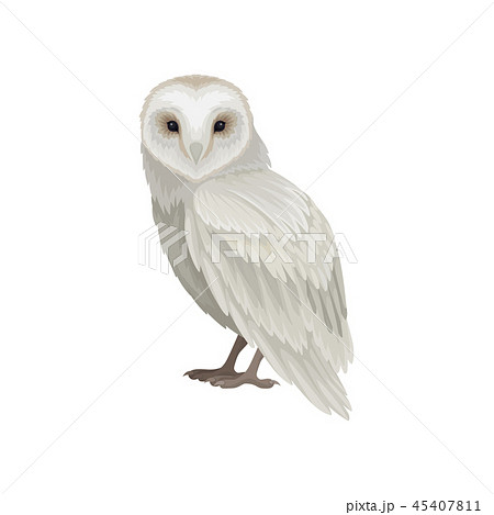 Flat vector icon of snowy owl, side view. Large bird with white-gray feathers. Wildlife and fauna 45407811