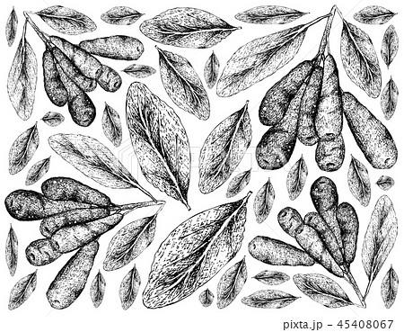 Honeyberries on White Background 45408067