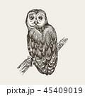 ふくろう フクロウ 梟のイラスト 45409019