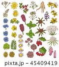 花 植物 植物画のイラスト 45409419