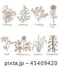 花 植物 植物画のイラスト 45409420