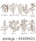 花 植物 フラワーのイラスト 45409421