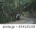 森 林 森林の写真 45410148