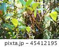ジャングルの風景写真 ボルネオ島 45412195