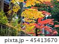 日光東照宮 紅葉 風景の写真 45413670