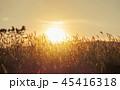 アブストラクト 抽象 抽象的の写真 45416318