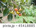 かき カキ 柿の写真 45418885