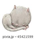 ねこ ネコ 猫のイラスト 45421599