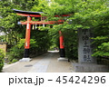5月 新緑の宇治上神社 45424296