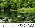 6月 緑の鳥山公園 -北海道のエメラルドグリーンの池- 45424308