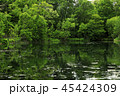 6月 緑の鳥山公園 -北海道のエメラルドグリーンの池- 45424309