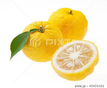 柚子  45433101
