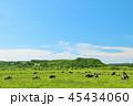 青空 牛 牧場の写真 45434060
