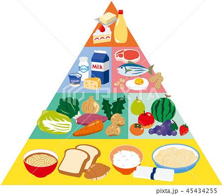 フードピラミッド 45434255