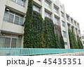 宿根朝顔によるグリーンカーテンの例 45435351