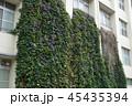 宿根朝顔によるグリーンカーテンの例 45435394