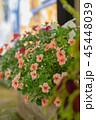 夜の繁華街に咲く花 45448039