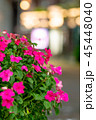 夜の繁華街に咲く花 45448040