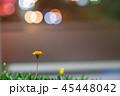 夜の繁華街に咲く花 45448042