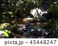 ボルネオ島ジャングル 清流 45448247