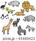 動物たち 45460422