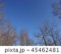 青空に向かって枝を伸ばす冬の木々 45462481
