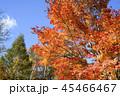 紅葉と青空 45466467