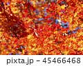 鮮やかな紅葉 45466468