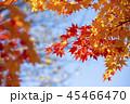 紅葉を見上げる 45466470