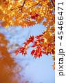 紅葉を見上げる 45466471