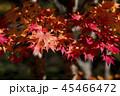 木漏れ日と紅葉 45466472