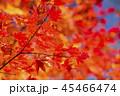 鮮やかな紅葉 45466474