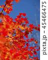鮮やかな紅葉 45466475