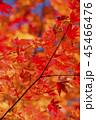 鮮やかな紅葉 45466476