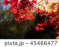 紅葉(和風なトーン) 45466477