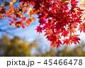 紅葉(和風なトーン) 45466478
