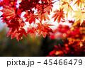 紅葉と太陽(和風なトーン) 45466479
