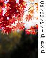 紅葉と太陽(和風なトーン) 45466480